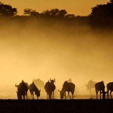 South Africa Kruger Lanner Gorge Safari