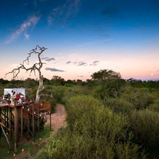 header treehouse sabi sands