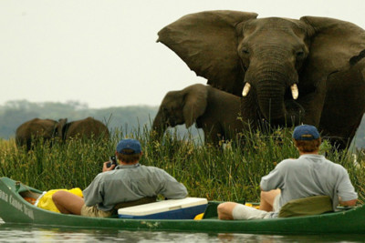 An elephant at Zimbabwe's Mana Pools