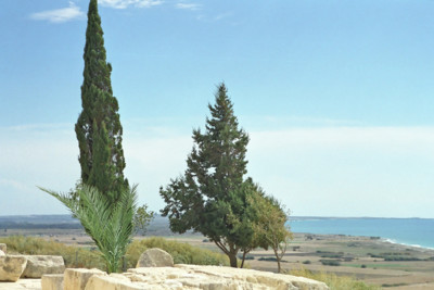trees in cyprus