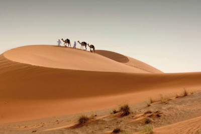 camels in the dessert