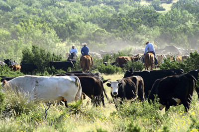 Ranching in the USA
