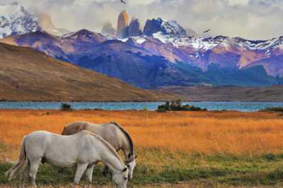 chile_andes_horses