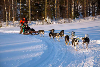 Pine_Tree_Lodge_dogsled