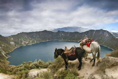 Horses in the Highlands, Ecuador