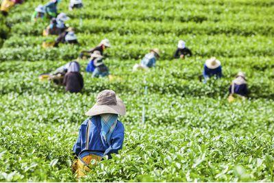 Tea Farmers, Sri Lanka