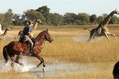a riding safari in Botswana