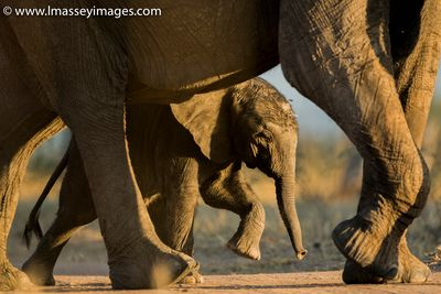 Luke Massey's photo of a baby elephant