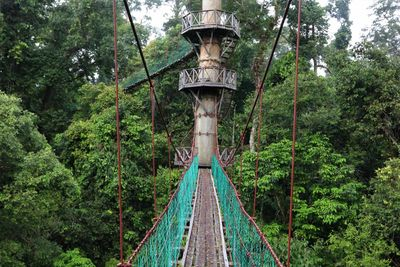 jungle canopy walk
