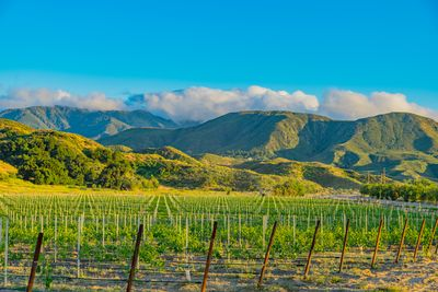 temecula valley vineyard