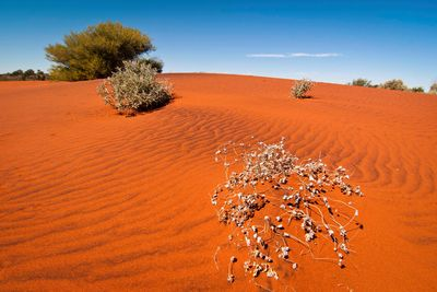 uluru red dunes