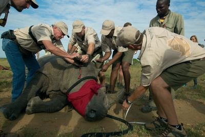 rhinos without borders conservation
