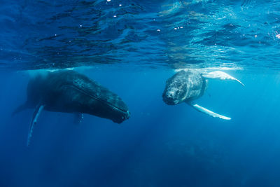 Whales and diving in Mozambique