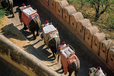Amber fort and elephants