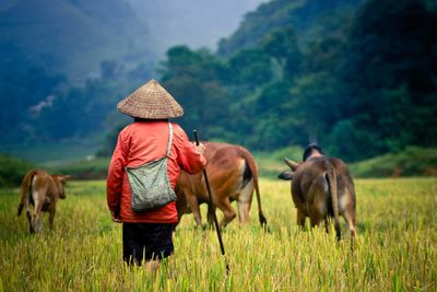 Farming in laos