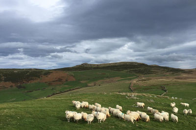 Sheep farm in Wales