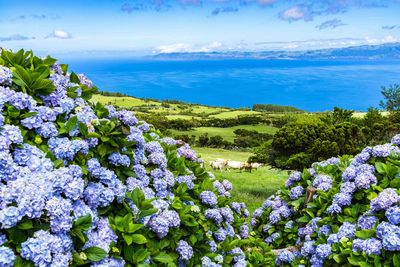 flowers in the azores