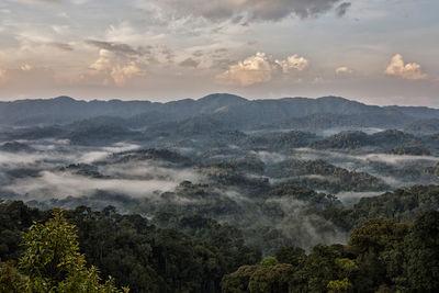 nyungwe forest national park in rwanda