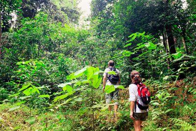 couple in the borneo rainforest