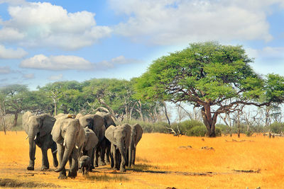 elephant safari zimbabwe hwange national park