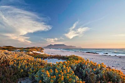 western cape flower season