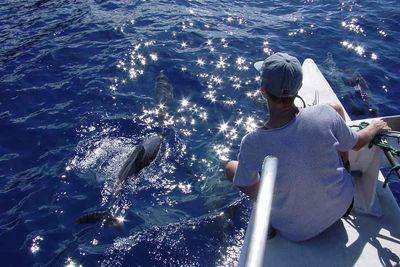 boat spinner dolphin gulf oman