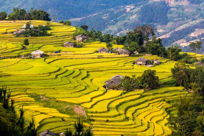 Ha Giang rice terrace