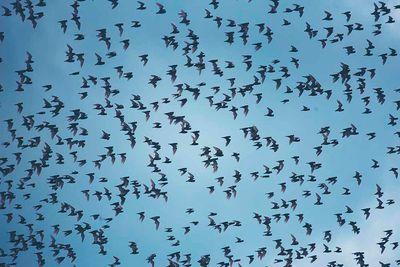 Zambia Bat Migration