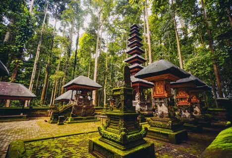 indonesia forest sanctuary