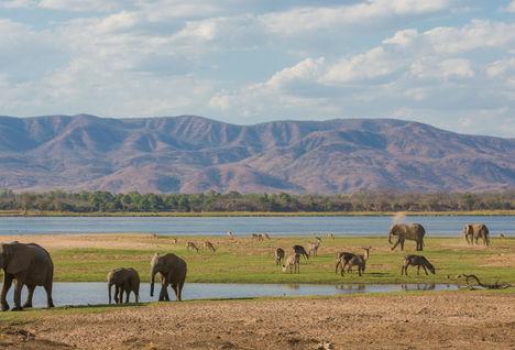 Elephants near the Zambezi River