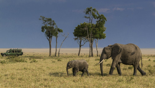 Selous Elephants