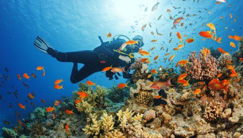 Scuba Diving, Philipines