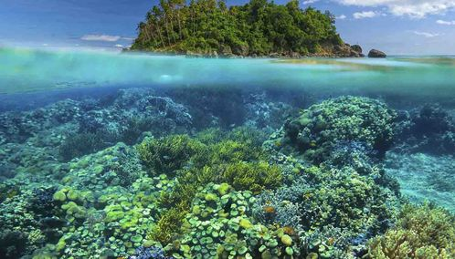 Coral reef in the Philippines
