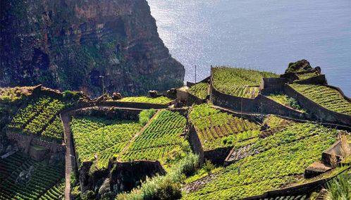 Hillside in Madeira