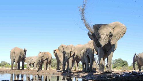 elephants playing with water