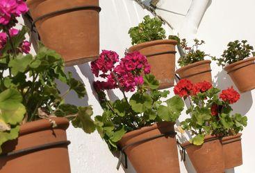 Flowers at Las Casas del Rey de Baeza, luxury hotel in Italy