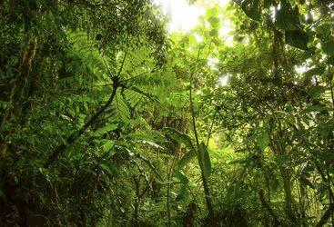 Belize Jungle