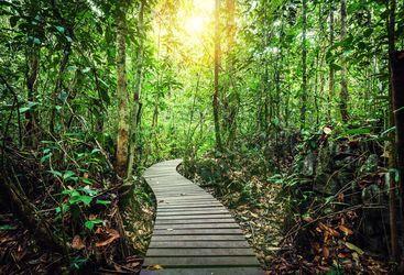 Rainforest path in Borneo
