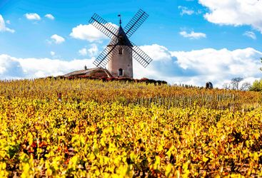 Windmill in yellow fields
