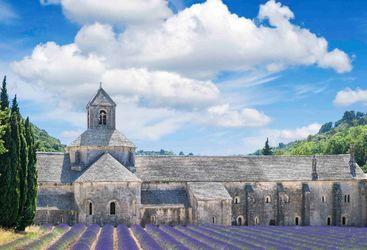Medieval house and lavendar