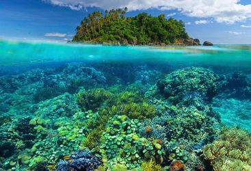 Coral Reef - Philippines