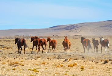 Horses on a ranch in Argentina