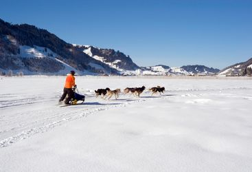 mushing in Finland