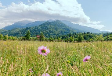 wild flowers in Transylvania