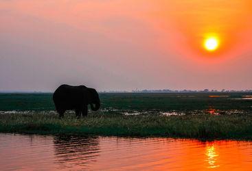 Zambia sunset and elephant