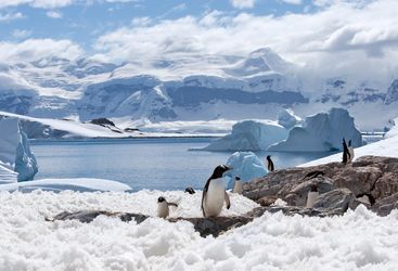 Penguins on the snow in Antarctica
