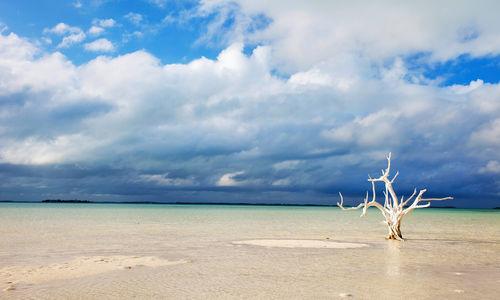 Lone tree at beach