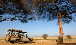 Safari in Ruaha National Park, Tanzania