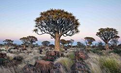 Tree in the bush