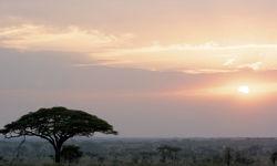Landscape of Serengeti